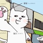 150304_cat_paw